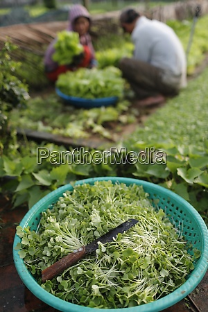 organic vegetable gardens in tra que